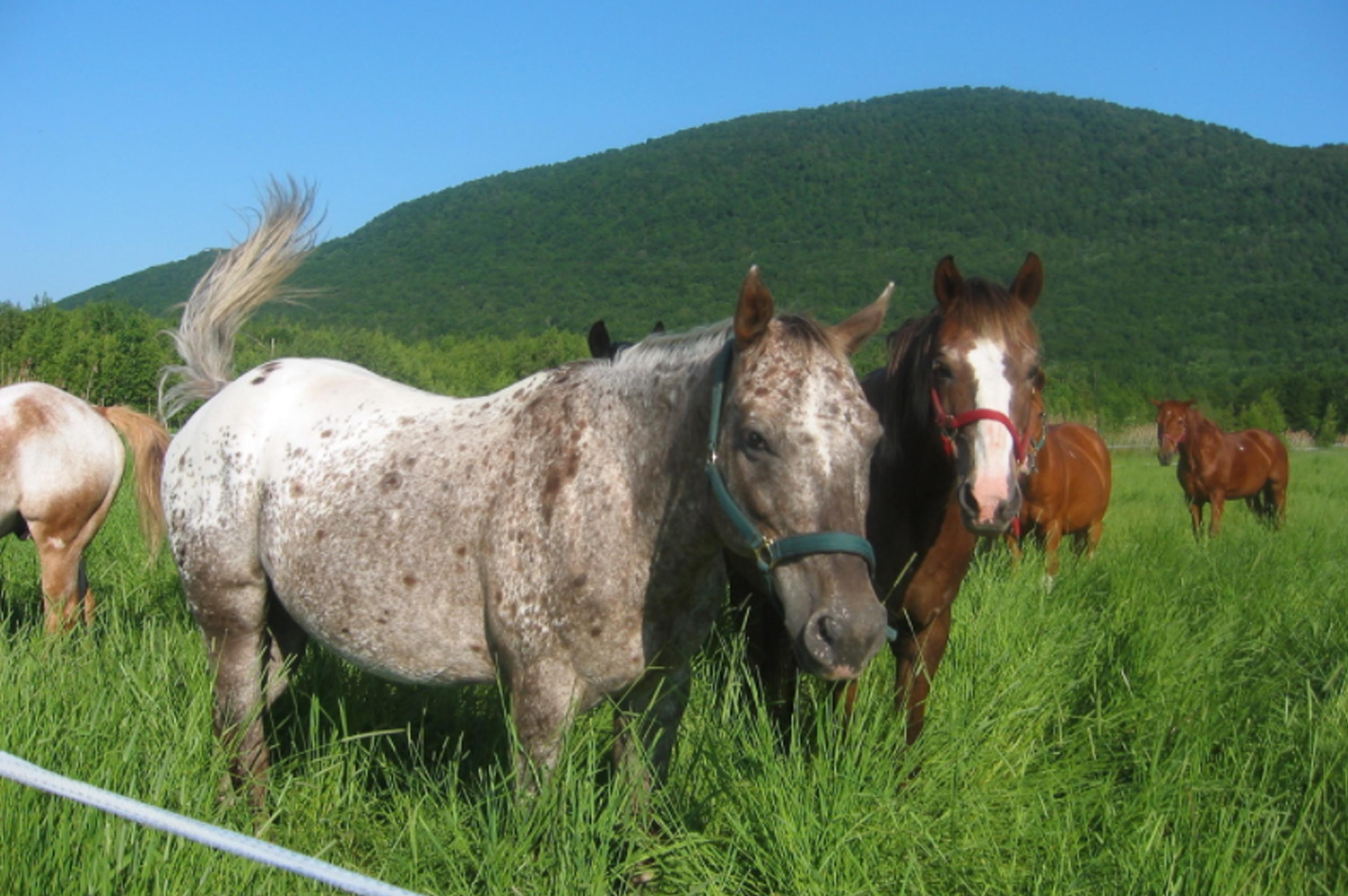 randonnee a cheval monteregie